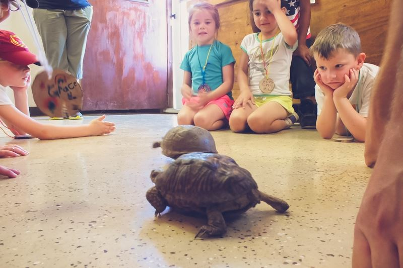 The kids love to race the box turtles after learning the differences between reptiles and amphibians