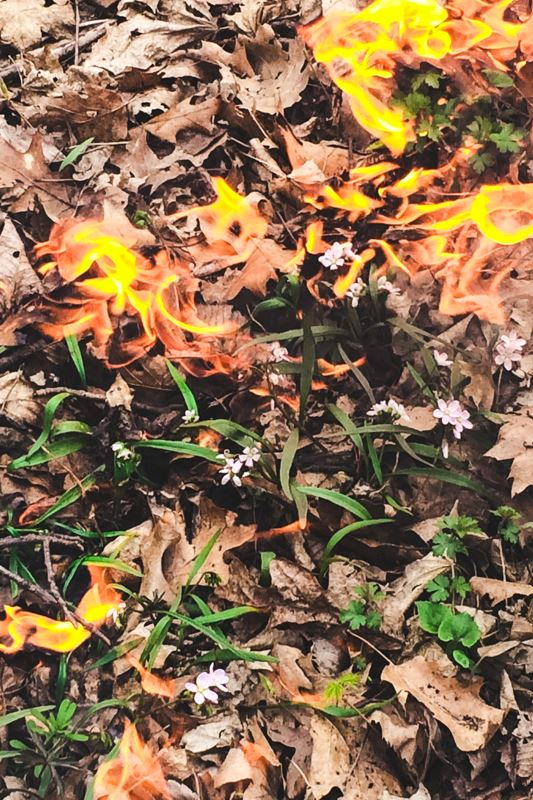 Burning Leaves